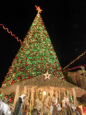 Christmas tree and Nativity, Manger Square